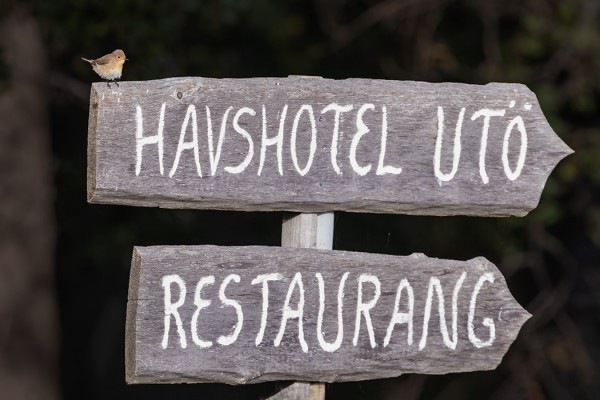 PIKKUSIEPPOJA OLI TÄNÄÄN KAKSI, TOINEN TOIMI HOTELLIN AGENTTINA