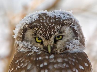 Helmipöllön kuva
