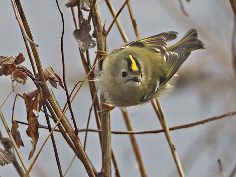 Kevät Linnut