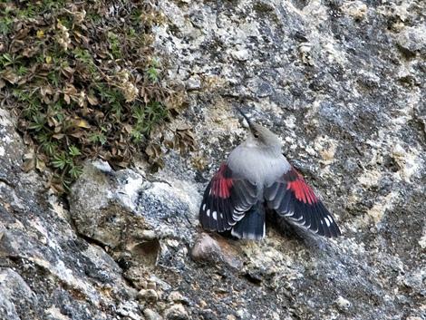 kalliokiipija